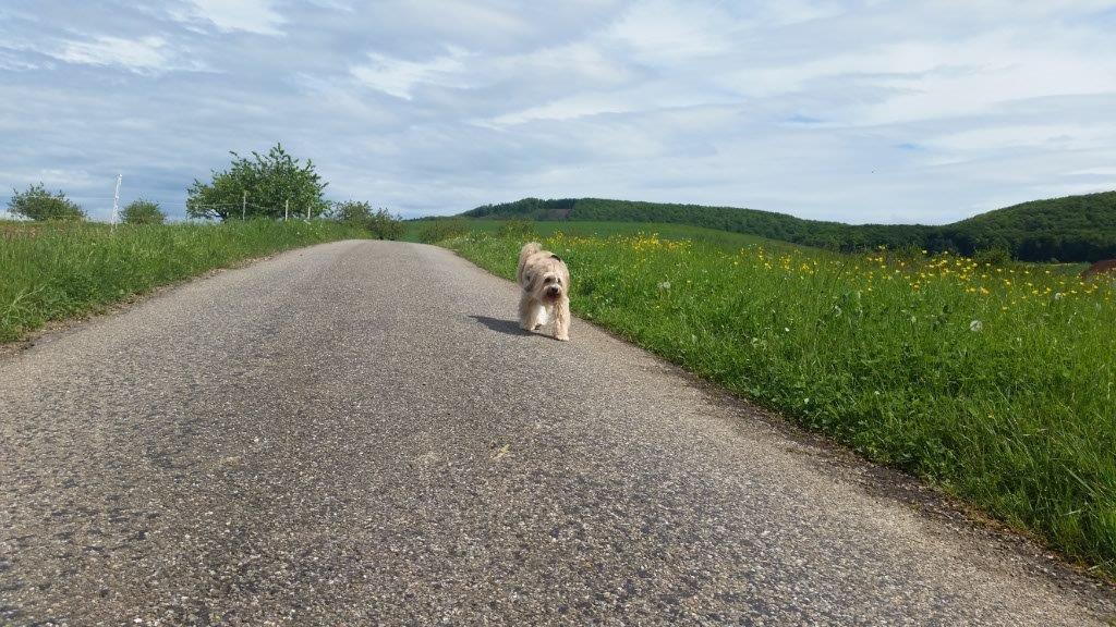 Spaziergang in Olsberg