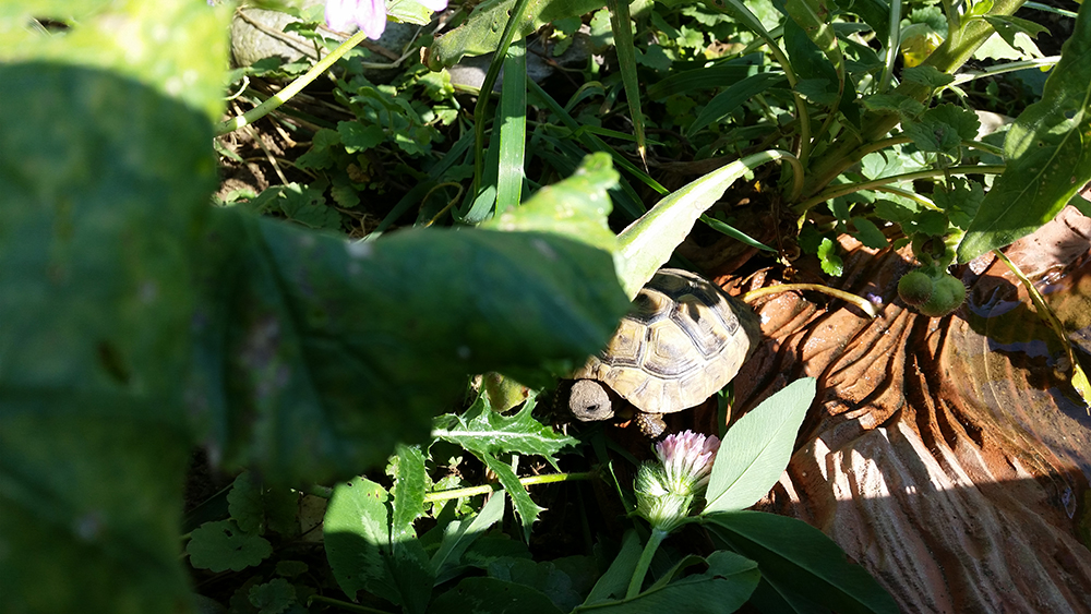 Schildkröten-Gehege