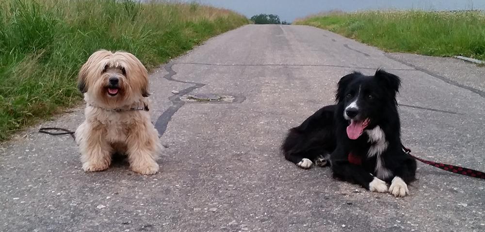 Bonsch & Shelby