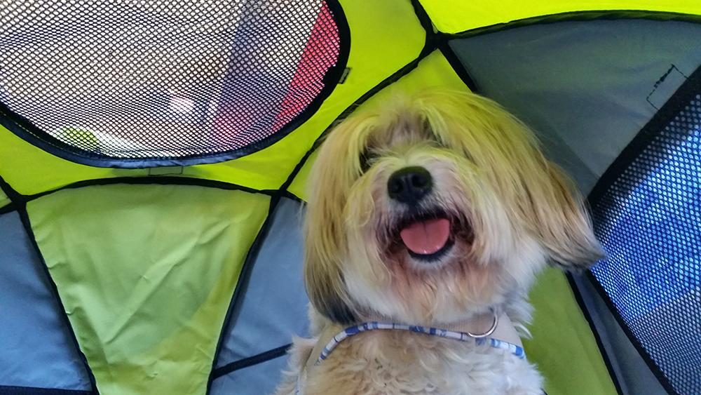 Bonsch im Hunde-Zelt