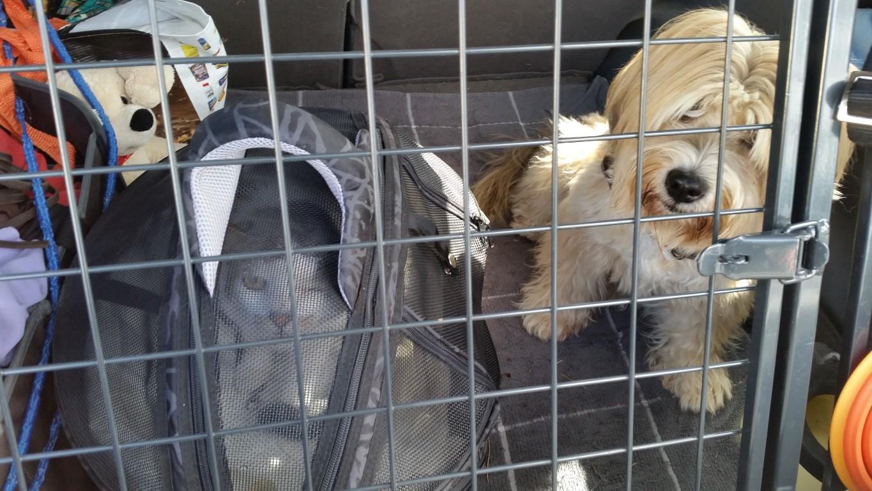 Bonsch & Finn auf dem Weg zum Tierarzt