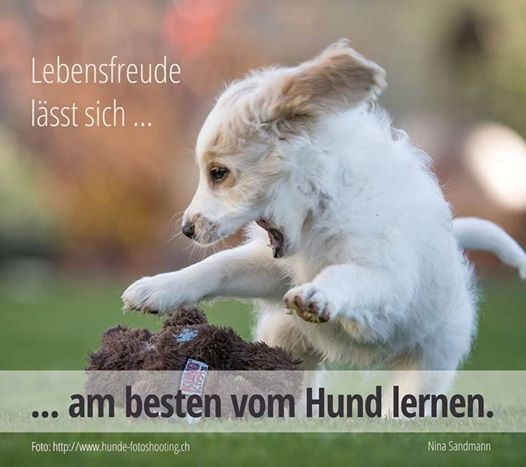 www.hunde-fotoshooting.ch