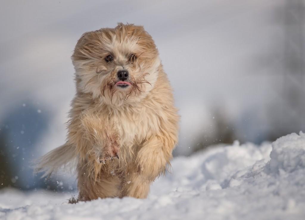 Bonsch im Schnee