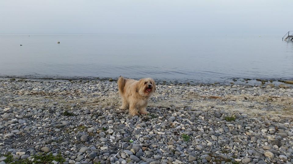 Bonsch am Bodensee
