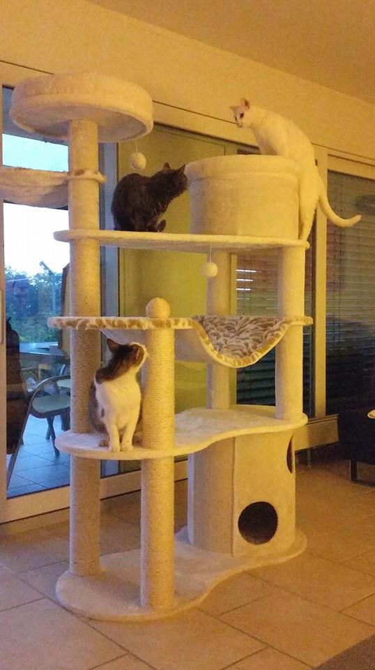 Neuer Katzenbaum