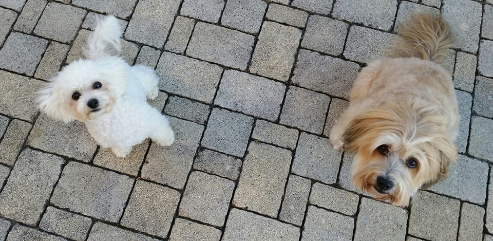 Gioja & Bonsch