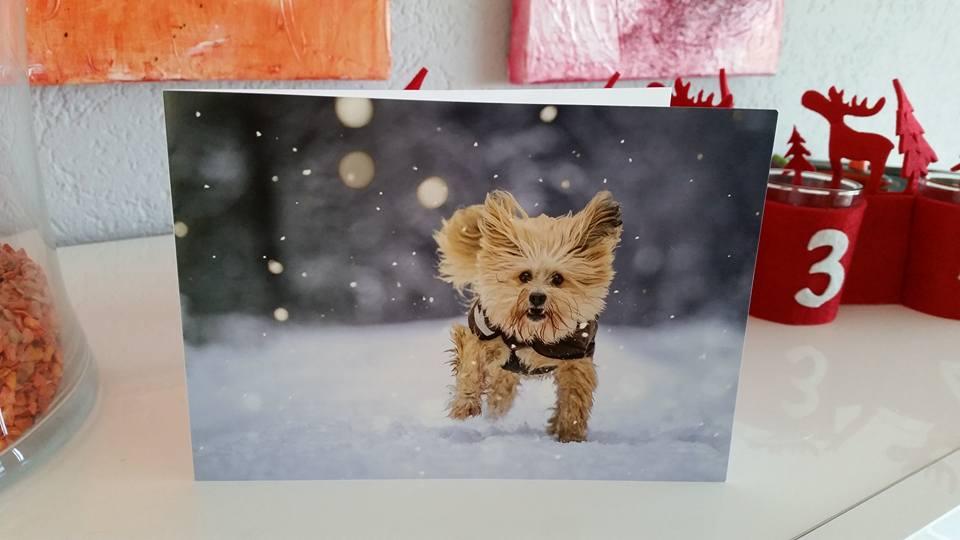 Bonsch als Weihnachtskarte