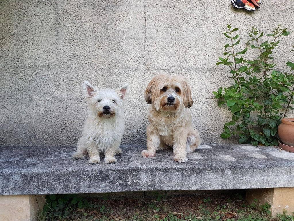 Timo & Bonsch
