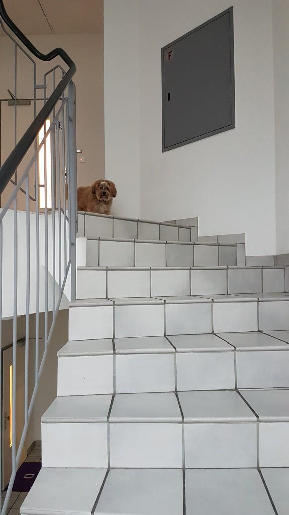 Bonsch möchte keine Treppe nutzen ...