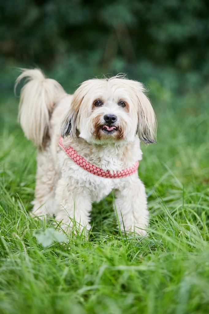 Hunde-Olympiade Weil - Tierfotografie Schiller