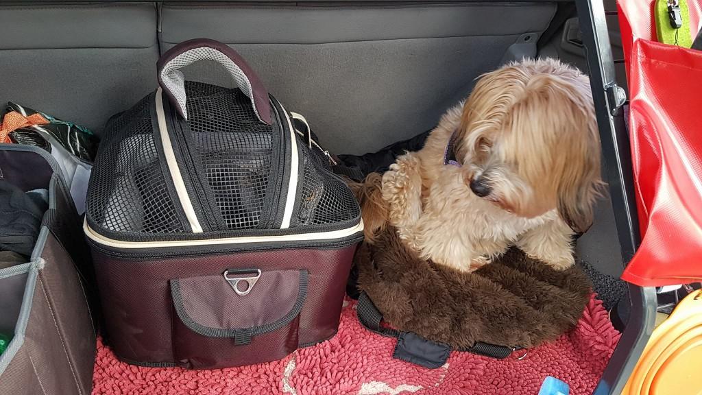 Mary & Bonsch auf dem Weg zum Tierarzt