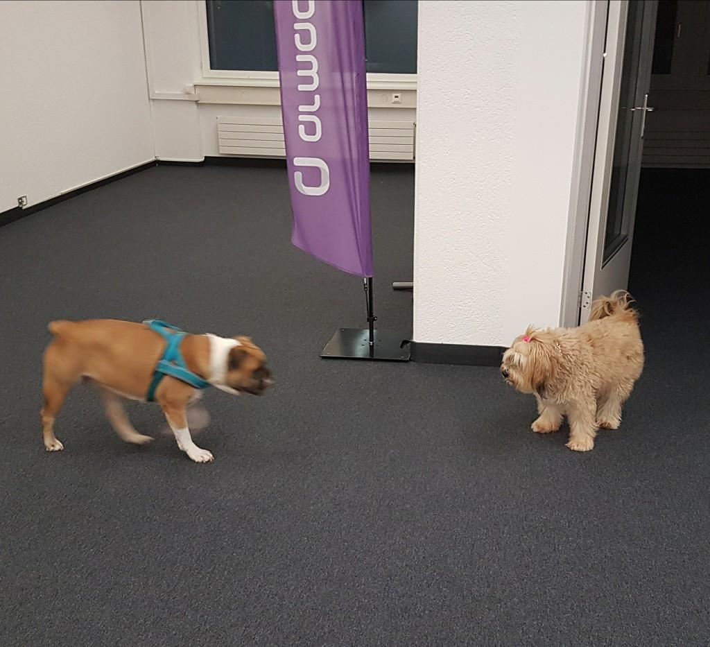 Thali & Bonsch im Büro