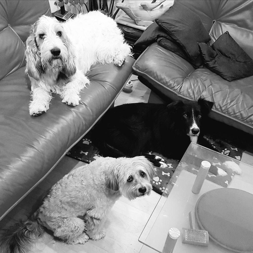 Bonsch mit Oz und Shelby